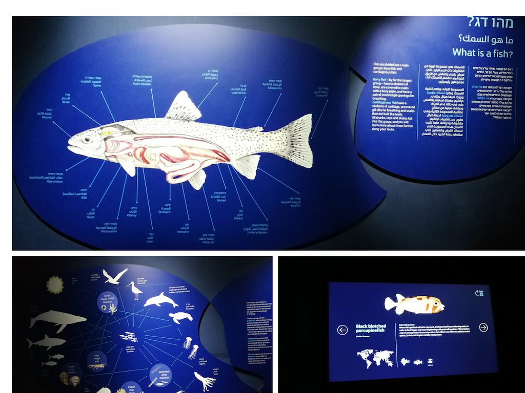 aquarium explication