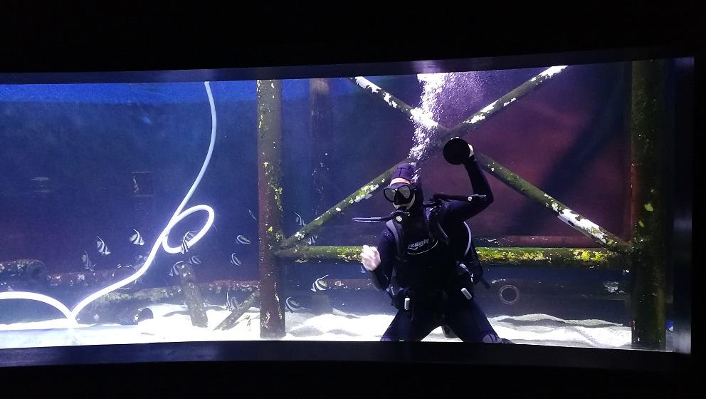 aquarium vitre