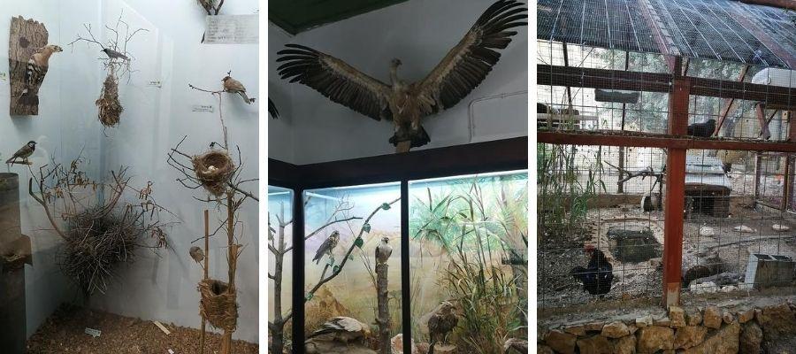 Histoire Naturelle oiseau