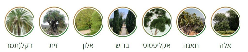 arbres symbole Israël
