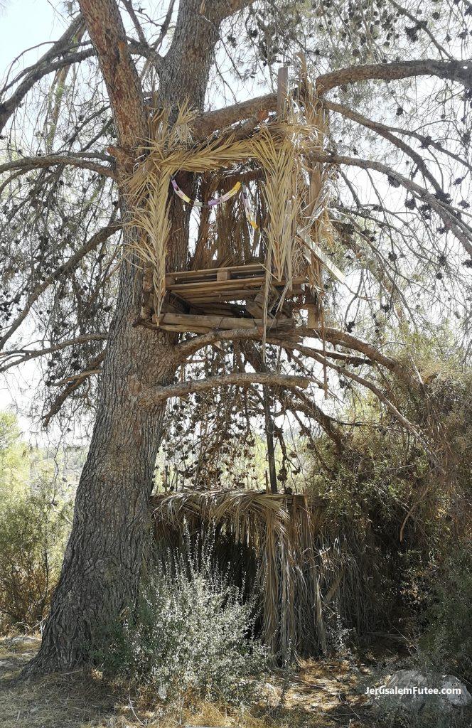 souccah arbre